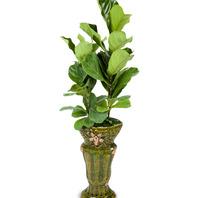 떡갈나무 (특호)